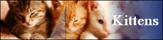 Petwarehouse Fort Wayne - Pet Care for Kittens