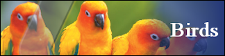 Petwarehouse Fort Wayne - Pet Care for Birds