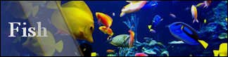 Petwarehouse Fort Wayne - Pet Care for Fish and Reef